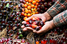 Olej palmowy - unikać?