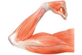 W jaki sposób proteiny wpływają na masę mięśniową? Białka i aminokwasy.